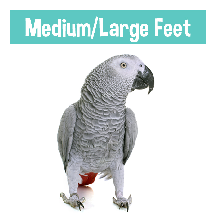 small cockatoos, african greys, amazons...