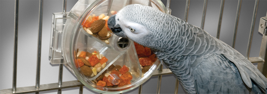 Teaching your Parrot how to Forage!