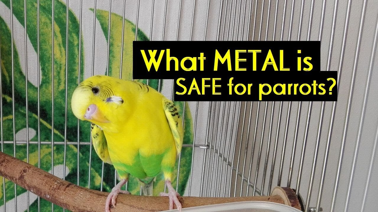 Image result for heavy metal bird poisoning