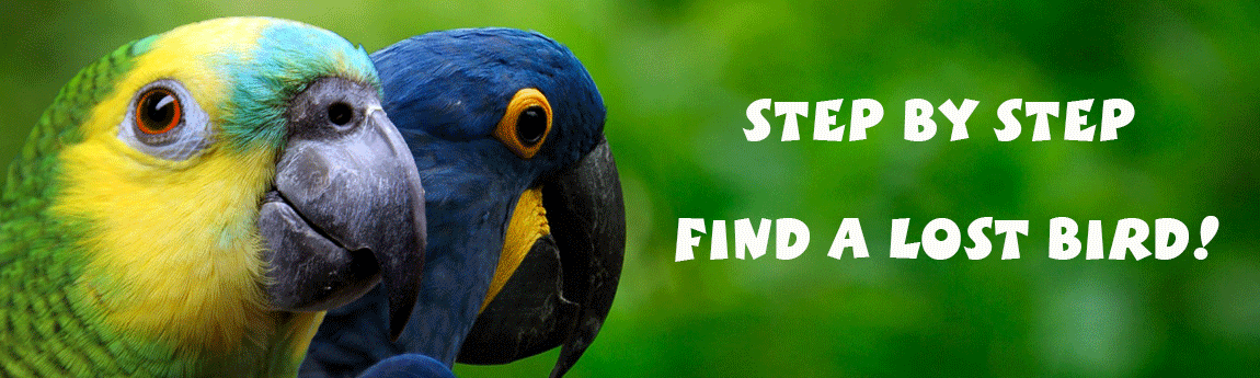 Step by Step: What to do if you lose your bird?