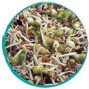Tango's Freeze Dried - Organic Sprouted Microgreens